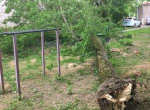 Аварийное дерево упало на лавочку на улице Комитетской Новочеркасска