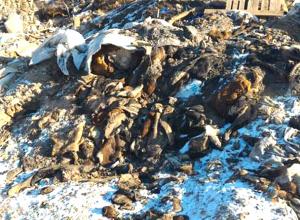 Шокирующие останки животных в Новочеркасске спровоцировали срочное создание спецкомиссии