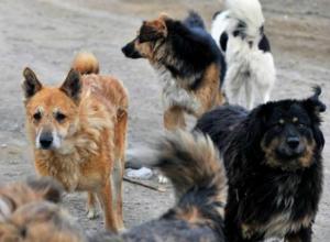 «Пострадавший мальчик с братьями прикармливали собаку», - администрация Новочеркасска