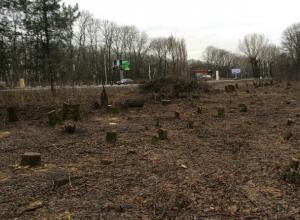 Ростовская межрайонная природоохранная прокуратура взяла на контроль вырубку деревьев на въезде в Новочеркасск