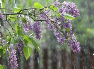 В предстоящие выходные новочеркасцев ожидает небольшой дождь