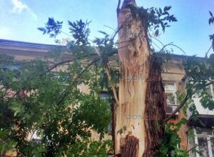 Налетевший на Новочеркасск ветер валил деревья и срывал баннеры