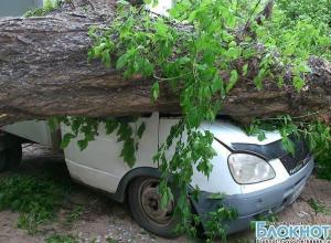 В Новочеркасске бушует непогода - три машины пострадали от упавших деревьев