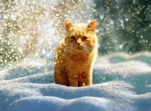 Солнечная и снежная погода ожидает новочеркасцев в начале рабочей недели