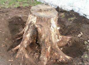 Посадка 60 деревьев, уборка 30 пней и уход за растениями обойдется Новочеркасску в 3 миллиона