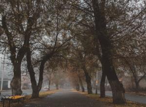 Синоптики обещают потепление в выходные в Новочеркасске
