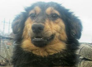 Сторожевую собаку бросили на произвол судьбы в Новочеркасске