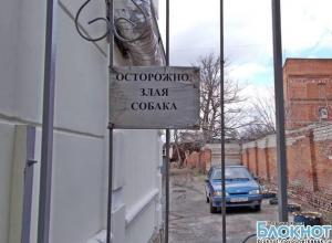 В центре Новочеркасска голодная бесхозная собака начала охотиться на людей