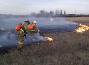 Более 300 ландшафтных пожаров произошло в Новочеркасске с начала года