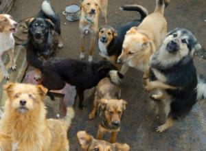 Определился победитель электронного аукциона на отлов и содержание бездомных животных в Новочеркасске
