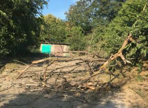 Рухнувшее сухое дерево перегородило единственную дорогу жителям многострадальной улицы Социалистической