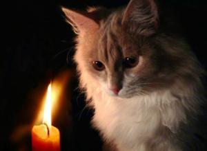 19 сентября 8 улиц Новочеркасска останутся без электричества