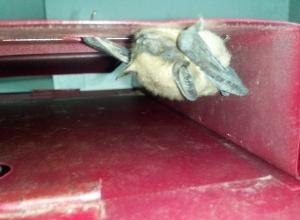 Страшная летучая мышь нашлась в почтовом ящике на улице Степной Новочеркасска