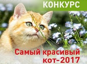 Началось голосование за участников конкурса «Самый красивый кот-2017»!