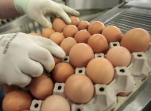 Семь десятков яиц странного происхождения нашли в новочеркасском доме ребенка