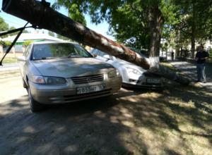 В Новочеркасске сгнивший столб обрушился на припаркованные машины