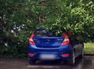 Дерево упало на два припаркованных автомобиля в центральной части Новочеркасска
