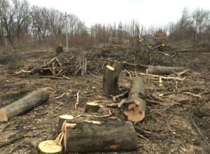 Ужасный вред экологии Новочеркасска нанесли неизвестные уничтожением деревьев