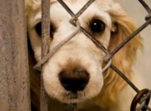 На ветеринара-убийцу завели уголовное дело в Новочеркасске