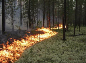 Администрация города опубликовала памятку по соблюдению правил пожарной безопасности в лесопосадках и рощах