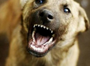 Жители Новочеркасска боятся ходить по улицам из-за растущих стай бродячих собак