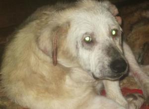История одной собаки: самая давняя обитательница приюта под Новочеркасском ищет семью