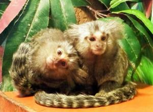Возможность потрогать руками экзотических животных появилась у жителей Новочеркасска
