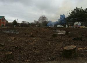 Несколько сотен деревьев спилили на въезде в Новочеркасск