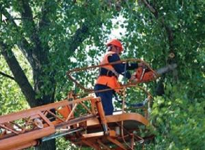 Новочеркасцы сняли на видео опасную опиловку деревьев над проезжающими автомобилями
