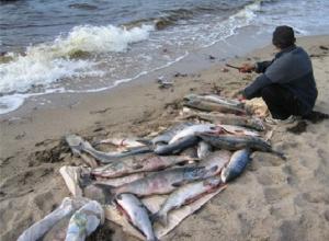 Браконьеров на резиновой лодке схватили под Новочеркасском при ловле краснокнижной рыбы