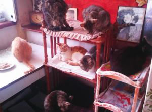 Пенсионерку приютившую 19 кошек, не поддерживают соседи и родная дочь