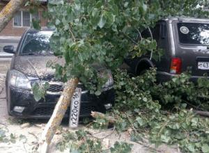 Тополь рухнул на пять автомобилей на улице Макаренко Новочеркасска