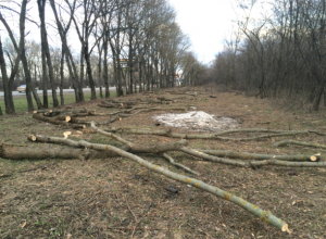 Несколько деревьев возле строящейся заправки на въезде в Новочеркасск вырубили без разрешения