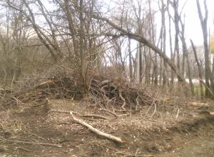 В Новочеркасске снова спилили деревья в лесополосе на въезде в город