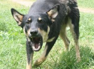 В Новочеркасске агрессивный бродячий пес снова напал на человека