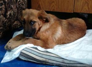Живодеры битой переломали лапы собаки в Донском микрорайоне Новочеркасска
