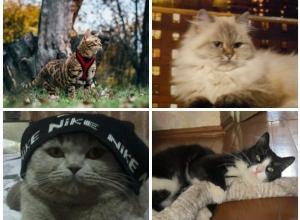 Лучшими в конкурсе «Самый-красивый кот-2017» стали Жорик, Ася, Тишка и Пушок