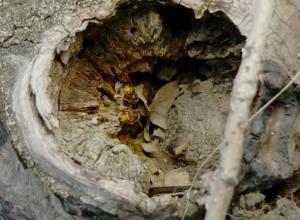 В Новочеркасске спасатели уничтожили гнездо шершней в детском саду