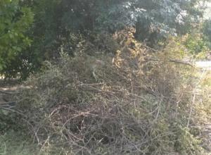 «По всему Соцгороду валяются сухие ветки и деревья, а возле 9-й школы горы мусора», - жительница Новочеркасска