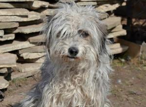 Симпатичная веселая собачка ищет новый дом и заботливых хозяев в Новочеркасске
