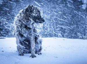 МЧС объявило штормовое предупреждение в Ростовской области