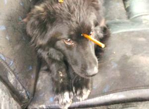 Собаку с шокирующим повреждением головы из-за живодеров нашли в Новочеркасске