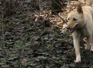 Найденный в минувшие выходные череп может принадлежать пропавшей в декабре жительнице Новочеркасска