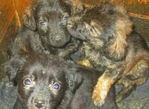 Пятеро пушистых малышей ищут дом и заботливых хозяев в Новочеркасске
