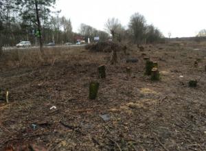 Кто и зачем вырубил деревья на въезде в Новочеркасск будет выяснять прокуратура
