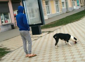 Питбуль без поводка и намордника в центре Новочеркасска испугал горожан