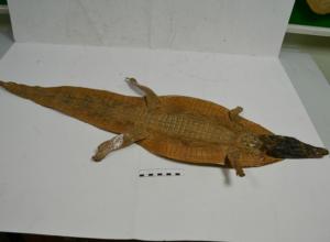Крокодиловые шкуры забрали у двоих пассажиров аэропорта под Новочеркасском