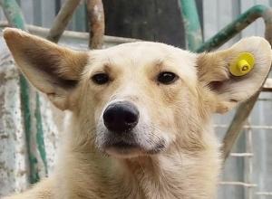 Чипированных собак не будут возвращать на улицы Новочеркасска