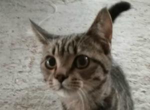 Еще один кот попал под эскалатор в ТЦ Платовский в Новочеркасске