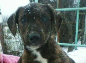 Четверо осиротевших щенков, ищут семью под Новочеркасском
